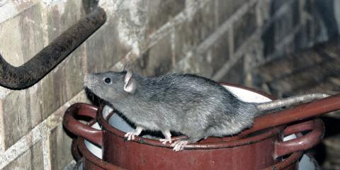 3 Urgent Situations That Require a Pest Exterminator ASAP, Columbus, North Carolina