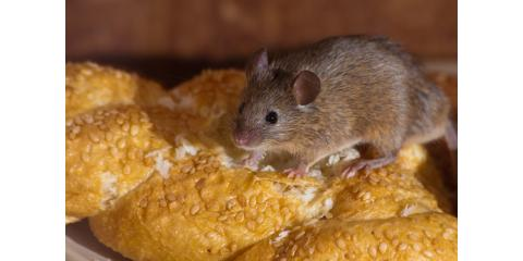 How MICE and Rats can take over, Mobile, Alabama
