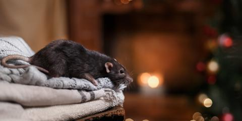 Pest Control 101: Preparing Your Home for Winter, Brewster, New York