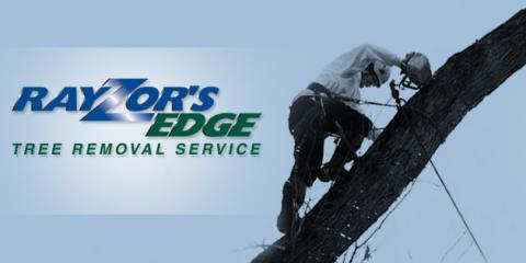 Rayzor's Edge Tree Service , Tree Removal, Services, Stratford, Connecticut