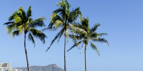 3 Kaka'ako Attractions for Outdoors Enthusiasts, Honolulu, Hawaii