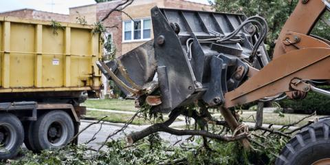 3 Subtle Signs You Need Tree Removal, Clarksville, Texas