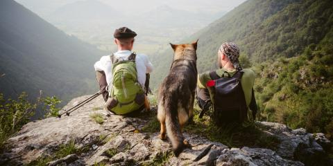 3 Simple Steps to Prepare Your Dog for the Hiking Trail, Ann Arbor, Michigan