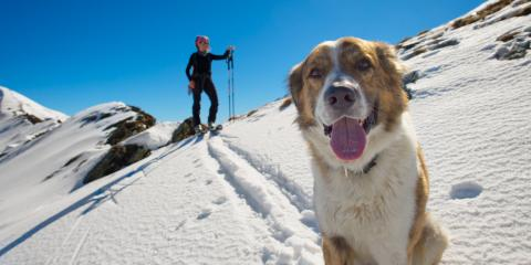 Have an Adventurous Canine? Shop Dog Gear at Your Local REI, Albuquerque, New Mexico