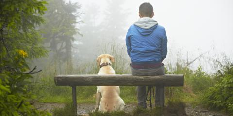 Don't Forget Your Dog's Camping Gear This Season, Cranston, Rhode Island