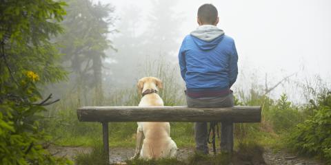 Don't Forget Your Dog's Camping Gear This Season, Tacoma, Washington