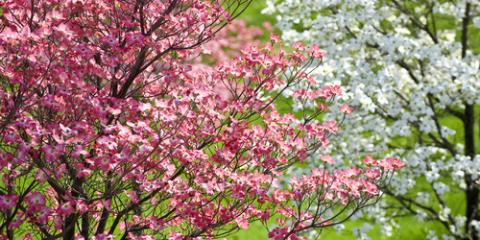 5 Common Missouri Trees That Should Be Regularly Maintained, St. Charles, Missouri