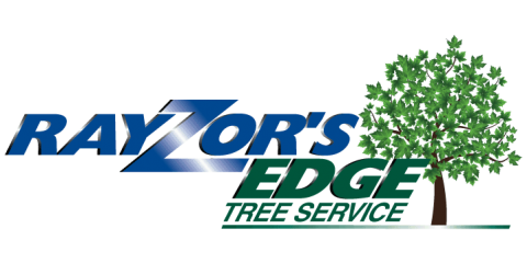 Save 25% on Tree Removal, Stratford, Connecticut