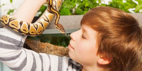 What Should You Expect During a Reptile Vet Visit?, Lincoln, Nebraska
