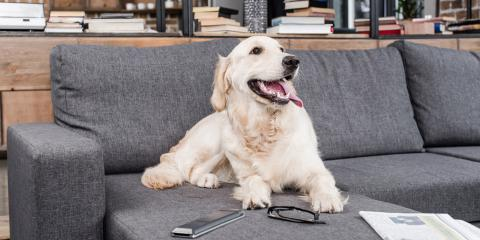 5 Tips on Preparing Your Home's Electrical Wiring for a Pet, Dayton, Ohio