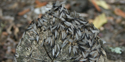 3 Signs of Summer Termites From Residential Pest Control Pros in Lexington, Lexington-Fayette, Kentucky