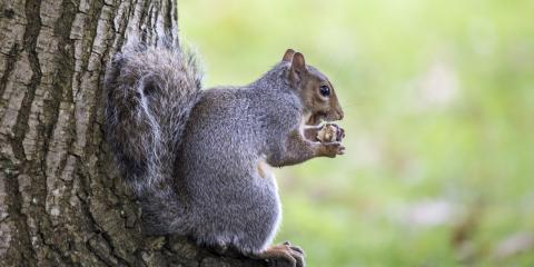 What to Know About Your Roofing & Squirrels, Covington, Kentucky