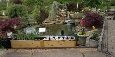 Benefits of Water Plants in a Water Garden, Delhi, Ohio