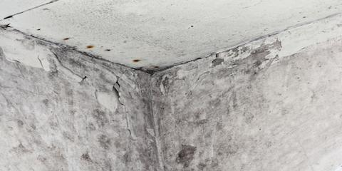 3 Signs of Mold Explained By MN's Top Restoration Services Company, St. Paul Park, Minnesota
