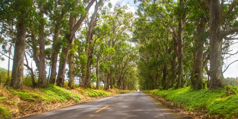 3 Wildfire Safety Tips to Protect Your Household, Koolaupoko, Hawaii