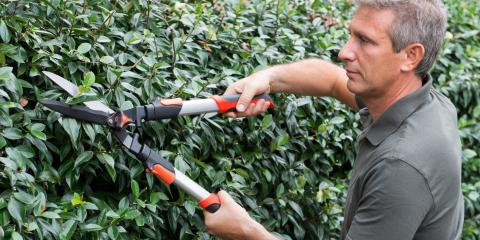 Do's & Don'ts of Shrub Care, Crescent, Wisconsin