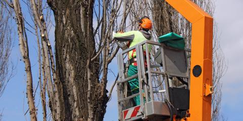 3 Reasons Winter Is the Perfect Time for Tree Trimming & Removal, Crescent, Wisconsin