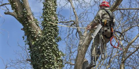 How to Tell When You Need Tree Maintenance, Crescent, Wisconsin