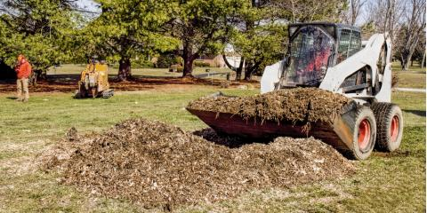 A Brief Guide to Stump Grinding, Crescent, Wisconsin