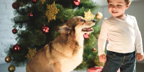 5 Helpful Pet Care Tips for a Safe Holiday Season, Rice Lake, Wisconsin