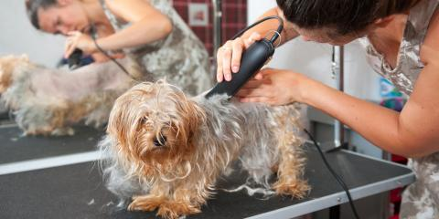 5 Signs Your Dog Is Ready for a Grooming Appointment, Richfield, Ohio