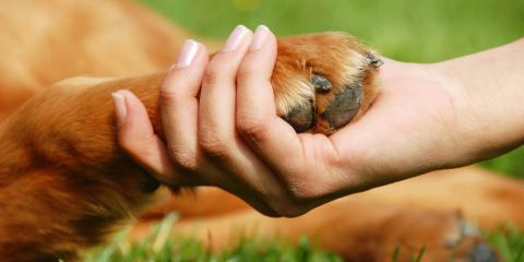4 Healthy Ways to Grieve After Losing a Pet, Richfield, Ohio