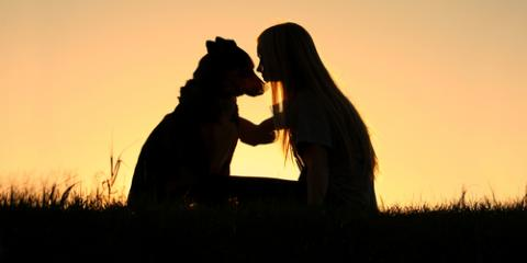 3 Ways Pet Loss Can Positively Change Your Life, Richfield, Ohio