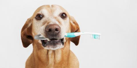 4 FAQs About Your Pet's Dental Visit to the Veterinarian, Rosenberg-Richmond, Texas