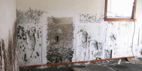 This Old House Mold Removal Pictures