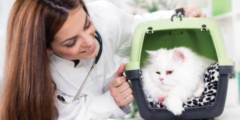 Why Your Pet Needs an Annual Visit to the Veterinarian, Rosenberg-Richmond, Texas