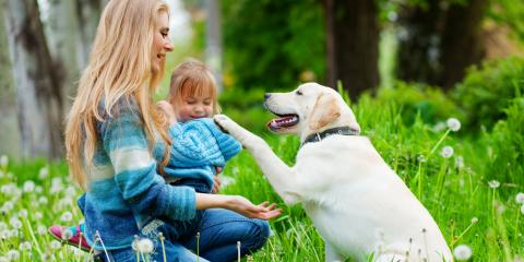 What to Know About Adopting a Senior Pet, Rosenberg-Richmond, Texas