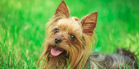 3 Tips to Care for a Long-Haired Dog, Rosenberg-Richmond, Texas