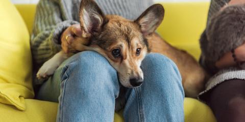 3 Illnesses Caused by Poor Canine Dental Health, Rosenberg-Richmond, Texas