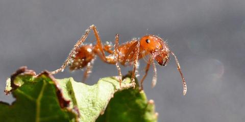Pest-Control Tips From Hamptonville's Best Exterminators, North Buck Shoals, North Carolina