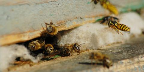 3 Exterminator-Approved Tips to Get Rid of Wasp Nets, North Buck Shoals, North Carolina