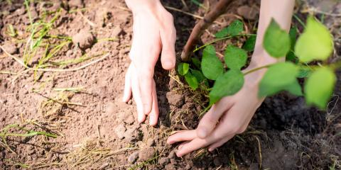 3 Tips for Planting New Trees, Marshan, Minnesota