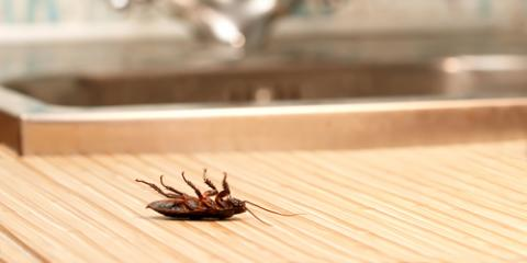 DIY Vs. Professional Roach Control: Oahu's Pest Control Experts Explain, Pahoa-Kalapana, Hawaii