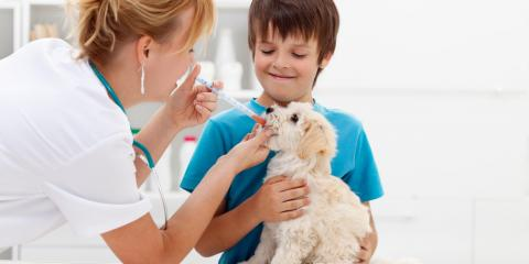 How Often Should Your Puppy See a Veterinarian?, Robertsdale, Alabama
