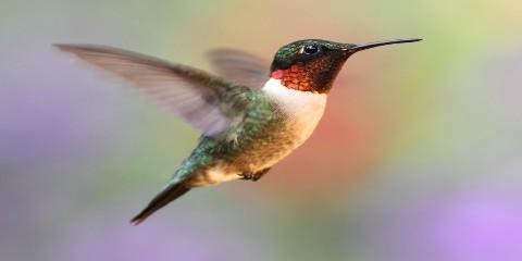 3 Fascinating Facts About Hummingbirds, Robertsdale, Alabama