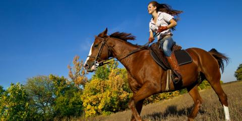 A Beginner's Guide to Horse Tack, Robertsdale, Alabama