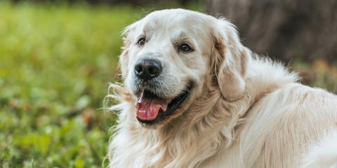 Understanding Obesity & Weight Loss in Dogs, Robertsdale, Alabama