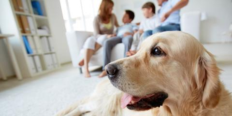 Northern KY Pet Day Care Shares 3 Tips to Help Dogs Cope With Visitors, Newport-Fort Thomas, Kentucky