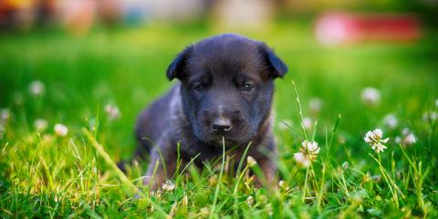 3 Summer Safety Tips for Dog Owners, Newport-Fort Thomas, Kentucky