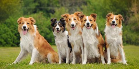 3 Health Benefits of Dog Daycare, Newport-Fort Thomas, Kentucky