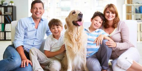 4 Tips for Pet Odor Removal, Rochester, Minnesota