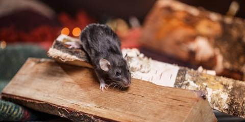 What Attracts Rodents to Your Home?, Rochester, New York