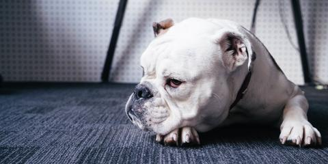 5 Tips to Keep Pets From Ruining Your Carpet, Rochester, New York
