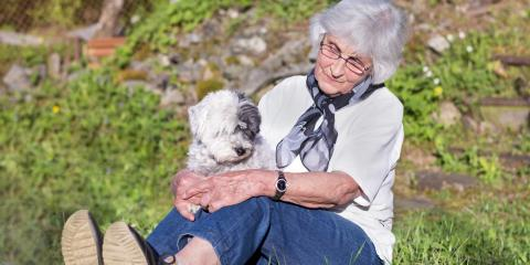 5 Aspects to Consider When Choosing a Dog for a Senior, Newark, New York