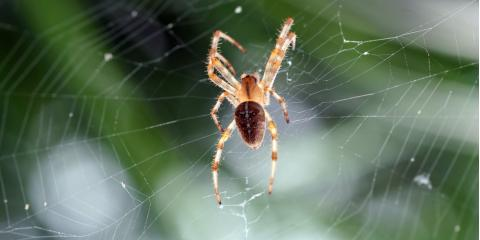 5 Spider Elimination Tips From the Pest Control Experts, Greece, New York