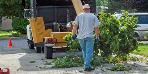 5 Reasons to Call a Professional Tree Service, Rochester, New York